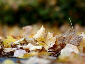Autumn Leaves | West Sussex Drains