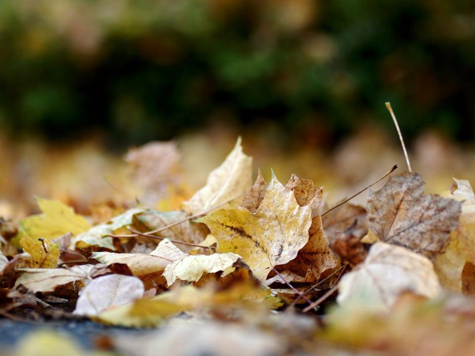 Autumn Leaves | West Sussex Drains