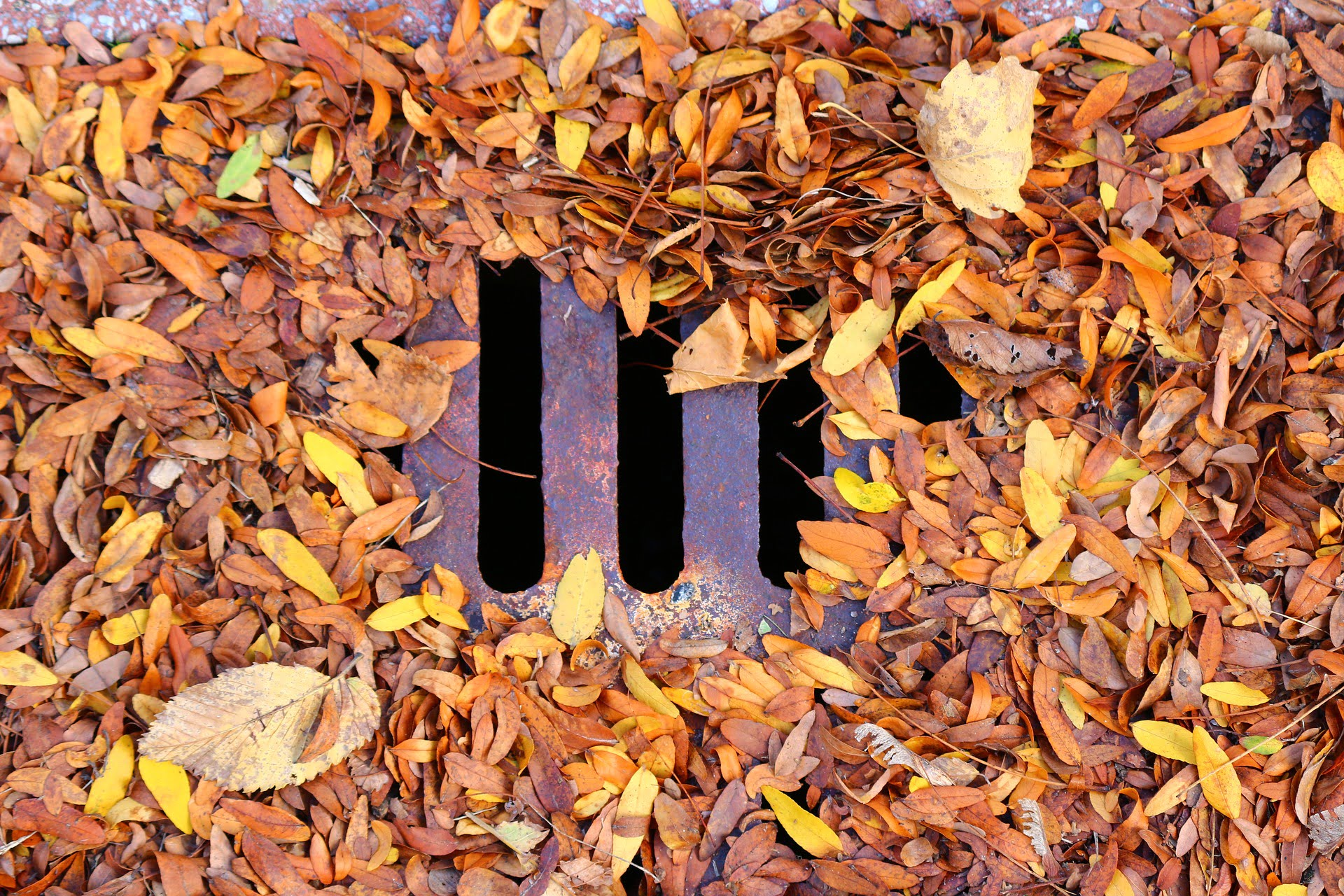 Leaves in a Drain | West Sussex Drains